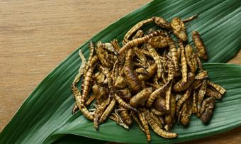 昆虫食豆知識