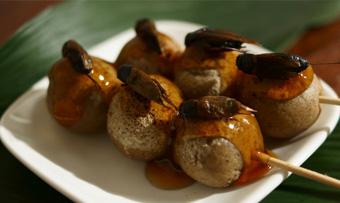 昆虫食レシピ
